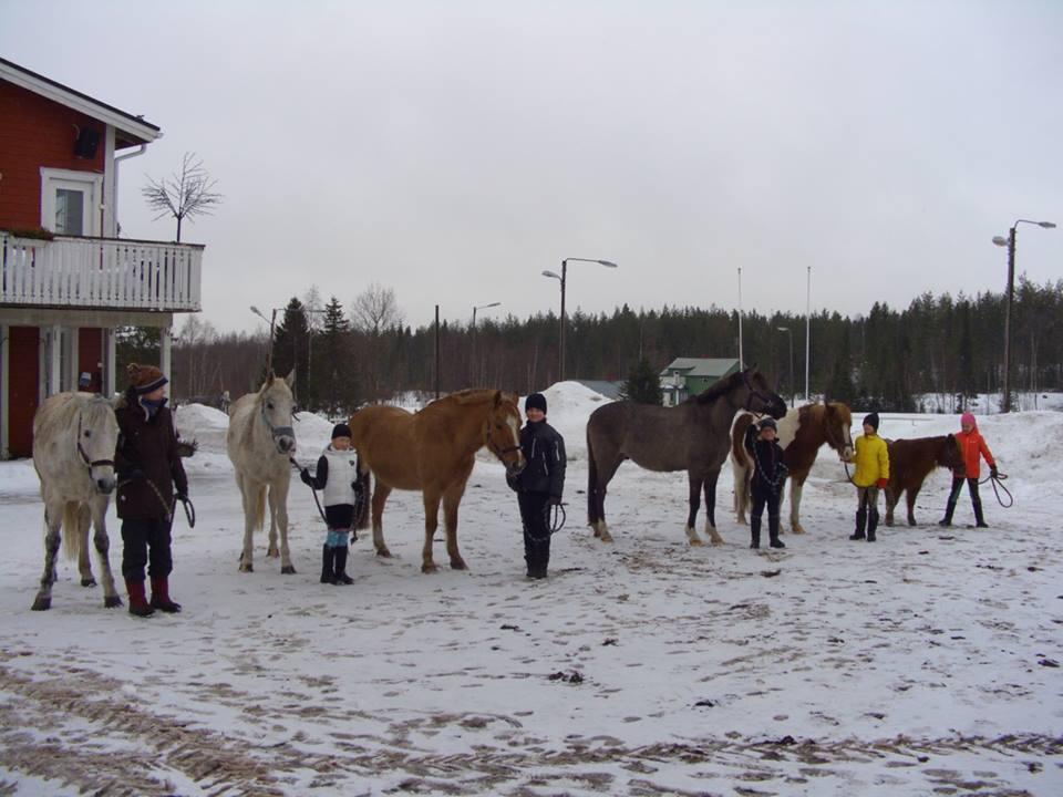 Hiihtolomaleiriläiste ponien kera